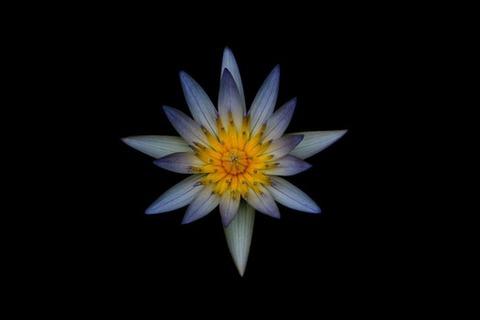 pexels-photo-105908-medium