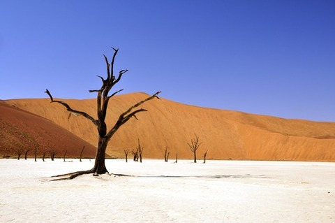 tree-desert-namibia-dead-vlei-68661-medium