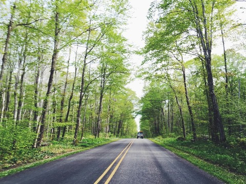 road-summer-forest-green-large