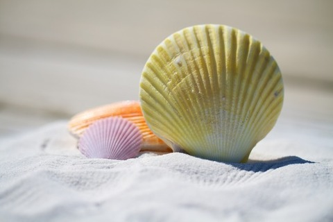 shells-massage-therapy-sand-medium
