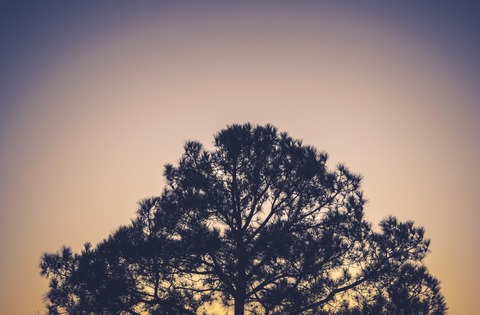 sky-evening-tree-large