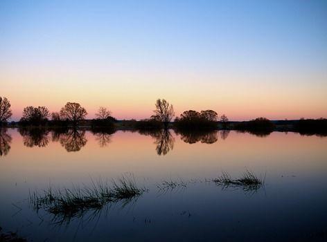 evening-tree-silhouette-background-65617-medium