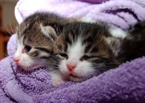 cat-young-cat-playful-pet-64147