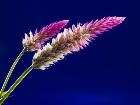 blossom-bloom-flower-wild-flower-62652