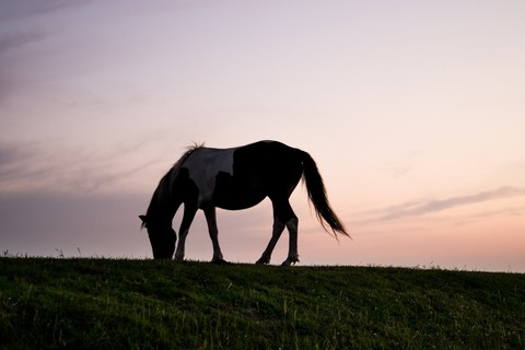 animal-silhouette-horizon-horse-large