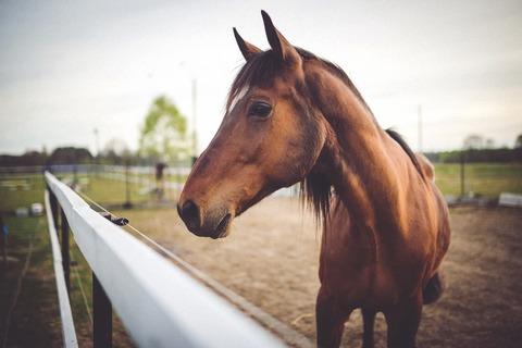 animal-brown-horse-large
