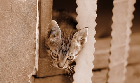 cat-play-funny-small-162221