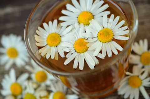 chamomile-chamomile-blossoms-medicinal-herb-herbal-medicine