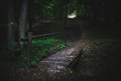 wood-nature-dark-forest-large