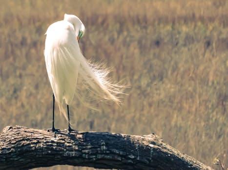 wind-florida-bird-egret-72133