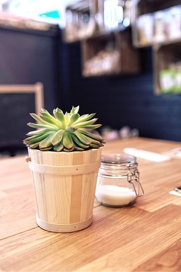 restaurant-plant-table-sugar-large